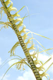 Traditional decor with coconut palm leaves Royalty Free Stock Photography