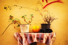 Traditional detail of Chania Old Town - yellow wall and flower pots Stock Photography