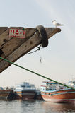 Traditional dhow boat moored up at dubai creek dubai with a seagull Royalty Free Stock Images
