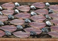 Traditional dried fish on the beach in Nazare, Centro - Portugal