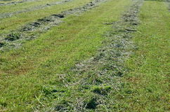 Traditional dry grass. South Bohemia. czech republik Royalty Free Stock Images