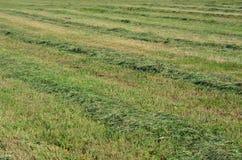 Traditional dry grass. South Bohemia. czech republik Stock Photo