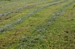 Traditional dry grass. South Bohemia. czech republik Stock Image
