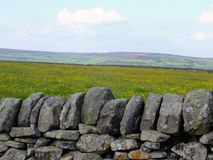 Traditional dry stone wall in front of a spring meadow with yellow spring flowers with yorkshire pennine hills in the background royalty free stock photography