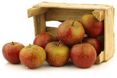 Traditional Dutch apples called goudrenet Royalty Free Stock Photography