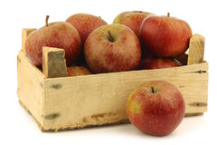 Traditional Dutch apples called goudrenet Stock Photography