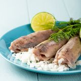 Traditional dutch food herring fish. Freshly salted herring fish, traditional dutch delicacy called hollandse nieuwe on turquoise plate and wooden background stock photos