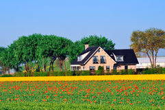 Traditional Dutch house Royalty Free Stock Image