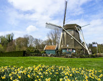 Traditional dutch windmill with daffodils, Netherlands Stock Images