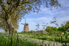 Traditional Dutch windmill in a summer landscape Royalty Free Stock Images