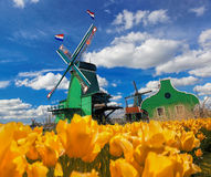 Traditional Dutch windmill with tulips in Zaanse Schans, Amsterdam area, Holland Stock Photography