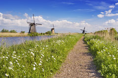 Traditional Dutch windmills on a sunny day at the Kinderdijk Stock Photography
