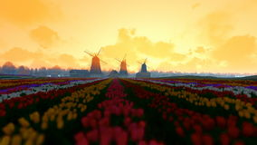 Traditional Dutch windmills with vibrant tulips in the foreground, morning mist stock video footage