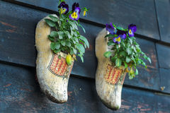 Traditional Dutch wooden clogs klompen using as garden pot for flowering pansies Stock Images