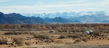 Traditional dwelling of Mongolian nomadic Royalty Free Stock Photos