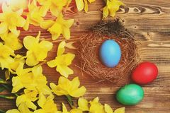Traditional easter colorful painted egg in nest, spring yellow narcissus Royalty Free Stock Photo