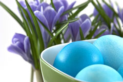 Traditional easter eggs in cup and crocuses behind Royalty Free Stock Image