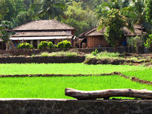 Traditional Farmhouse. A beautiful farmhouse in paddy fields of India Stock Images