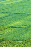 Traditional farming Stock Photo