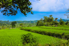 Traditional rice fields in Trawas, Indonesia. The traditional farming in Trawas, East Java - Indonesia stock image