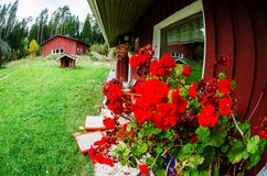 Traditional finnish cottage with flowers Royalty Free Stock Photography