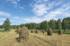 Traditional Finnish haystacks Stock Photo