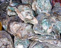 Traditional fish market stall full of fresh shell oysters. In Phuket Stock Photos