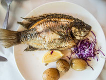 Traditional fish St. Peter of Galilee Stock Images
