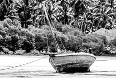 Traditional fisherman boat and palm trees Stock Photography