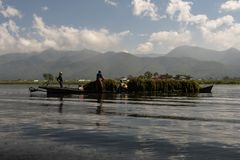 Traditional fisherman of Inle Lake. Fisherman in traditional costume fishing in balance, with a net, in a typical Inle lake canoe. Myanmar stock images