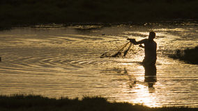 Traditional fisherman throwing a net in Sri Lanka. Sunset backlit in Arugam bay lagoon, Traditional fisherman throwing a net in Sri Lanka stock image