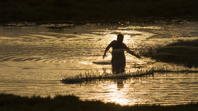 Traditional fisherman throwing a net in Sri Lanka. Sunset backlit in Arugam bay lagoon, Traditional fisherman throwing a net in Sri Lanka royalty free stock photography