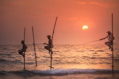 Traditional fishermen at the sunset, Sri Lanka. royalty free stock images