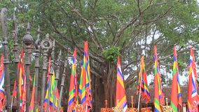 Traditional flags festival. The traditional flags the festival