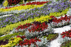Traditional flower exhibition Royalty Free Stock Photos