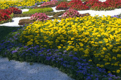 Traditional 59 flower exhibition, 2014 in Kiev, Ukraine Royalty Free Stock Images