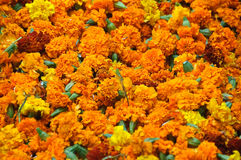 Traditional Flowers Background. Many Indian traditional flowers (for worshiping royalty free stock photo
