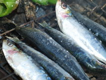 Traditional fresh grilled sardines with piments Stock Photo