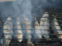 Traditional fresh grilled sardines Royalty Free Stock Images