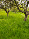 Traditional Orchard Garden Stock Photography