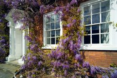 Traditional Georgian house front with Wisteria royalty free stock photography