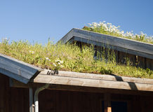 Traditional grass roof Stock Photo