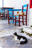 Traditional Greece series - cats and street tavernas, Amorgos is Stock Photography