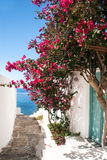 Traditional greek alley on Sifnos island Stock Images