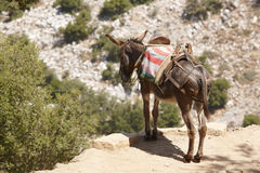 Traditional greek donkey. Rural mode of transportation. Crete. G Royalty Free Stock Photography