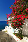 Traditional greek door on Sifnos island Stock Image