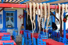 Traditional greek food Octopus drying in the sun Royalty Free Stock Photography