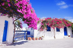Traditional greek house with flowers in Paros island, Greece. Blue door and blue window surrounded by magenta flowers Royalty Free Stock Photos