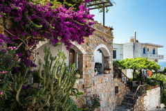 Traditional Greek stone house with  purple bougainvillea flowers Stock Images