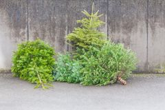 Traditional green christmas trees firs on street at xmas season. The x-mas trees waiting for buyers on sale before christmas holiday or after ending x-mas time Royalty Free Stock Photography